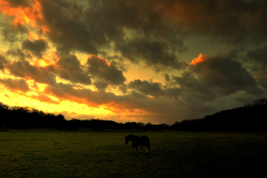 Lone Pony by andycoleborn