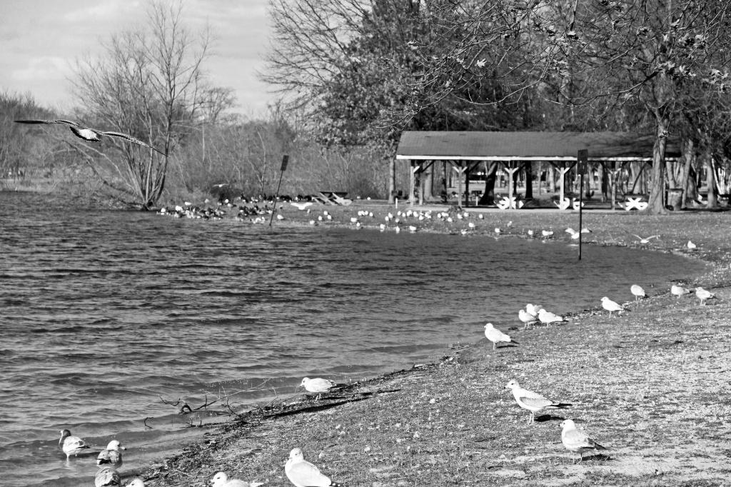 Winter Birds by hjbenson