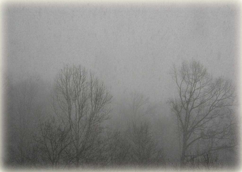 Snow squall by mittens