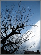 3rd Jan 2012 - Tree in January