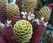 21st May 2010 - Ginger Plant Flower - Zingiber acridium Beehive Ginger