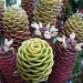Ginger Plant Flower - Zingiber acridium Beehive Ginger by loey5150