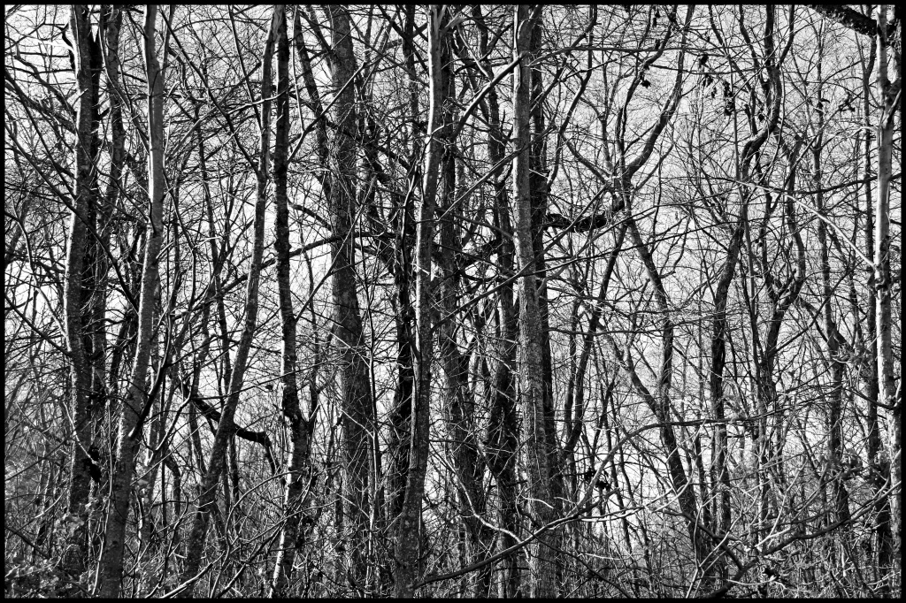 Starkness of Winter by hjbenson