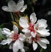 22nd May 2010 - Beautiful Blossoms