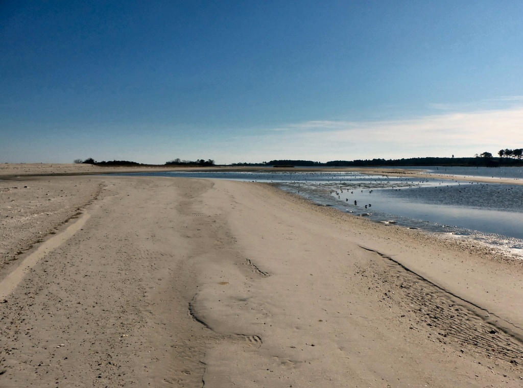 Low Tide on the Back River by dmariewms
