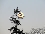9th Jan 2012 - Shoot the moon.