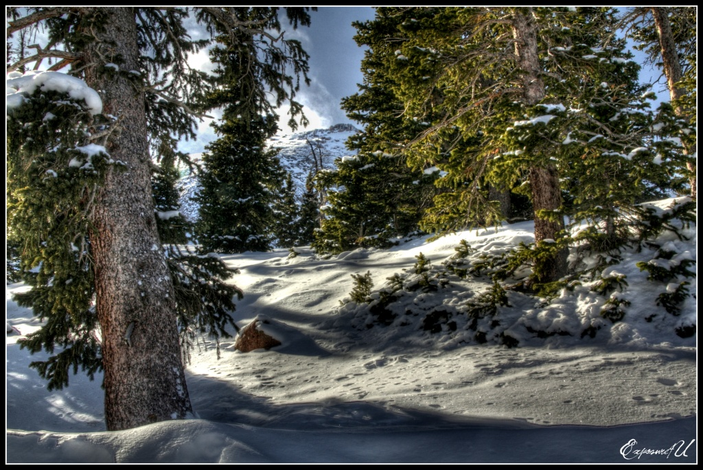 Blanketed With Snow by exposure4u