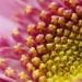 Daisy by myautofocuslife