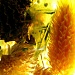 Weekly Theme Yellow Challenge - Sunshine Jar by myhrhelper