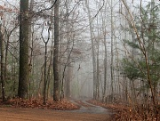 12th Jan 2012 - Foggy Day In Winter