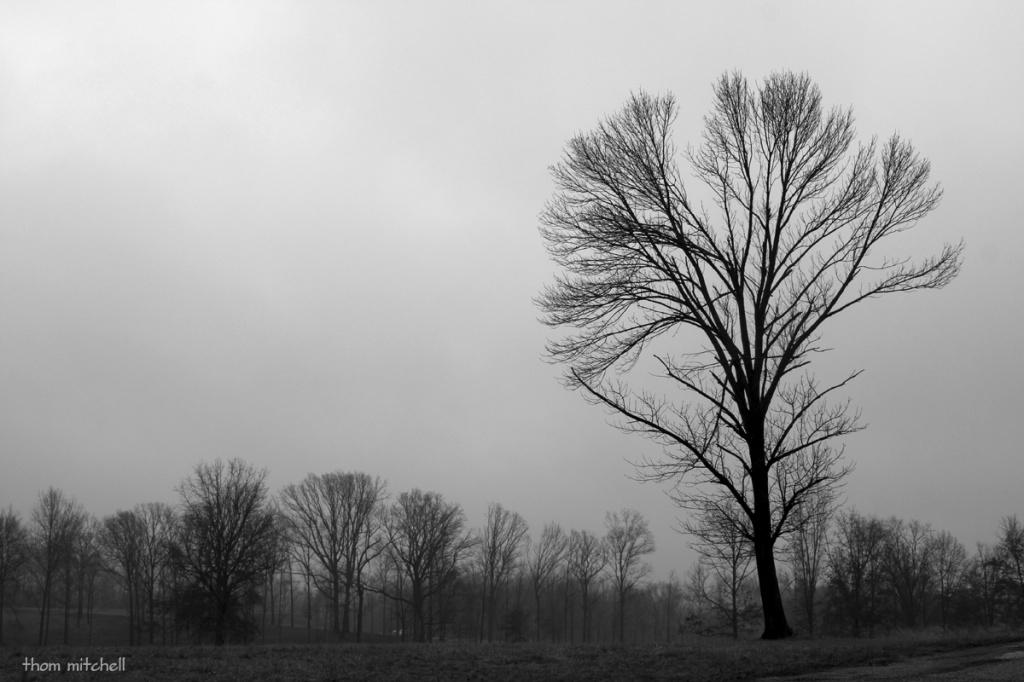 Winter drear by rhoing