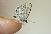 11th Jan 2012 - Tiny butterfly