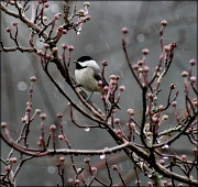 12th Jan 2012 - Winter weather