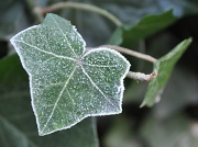14th Jan 2012 - On a cold and frosty morning ...
