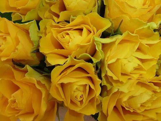 Yellow Roses by tonygig
