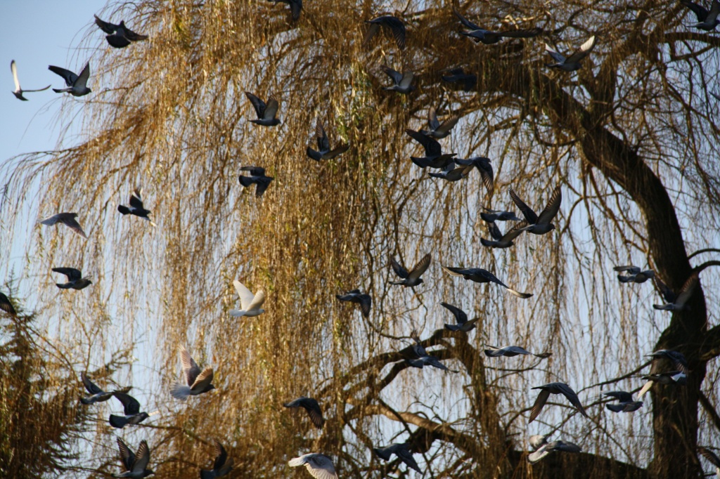Wings in the Willow by jennywren