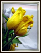 """15th Jan 2012 - """"til death do us part..."""""""