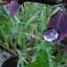 365-Water drops DSC02723 by annelis