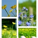 Yellow And Blue... by helenmoss