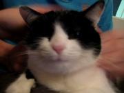 15th Jan 2012 - Smiley cat Smiley cat!