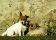 14th Jan 2012 - Just for fun: Figaro & Fleur