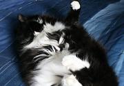 17th Jan 2012 - A ball of fur