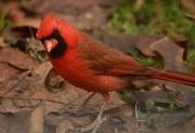 18th Jan 2012 - Bird With An Attitude