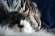 18th Jan 2012 - Sweet slumber