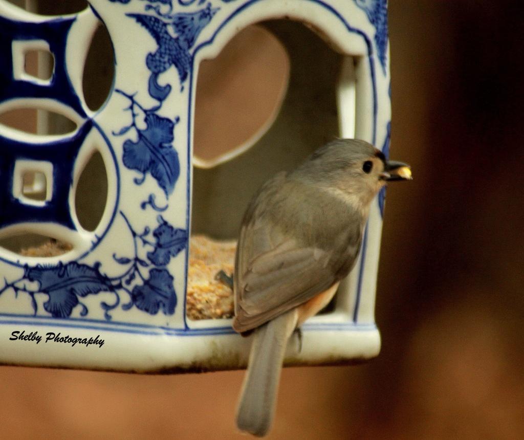 Ceramic Bird Gazebo by vernabeth