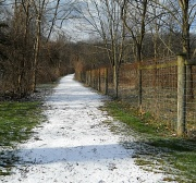 19th Jan 2012 - Snow covered path