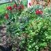 Garden by bruni