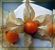 20th Jan 2012 - still life #3 - i love cape gooseberries!
