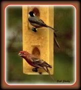 21st Jan 2012 - Hungry Rainy-Day Birds