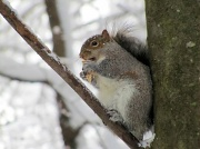 22nd Jan 2012 - Squirrely guy again.