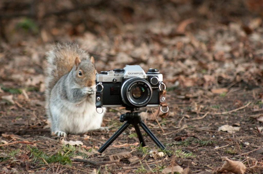 Squirrel Photographer by natsnell