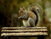 22nd Jan 2012 - Belated Squirrel Appreciation Day