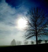 22nd Jan 2012 - Sunday morning sunrise through the mist....