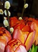 21st Jan 2012 - not long 'til spring