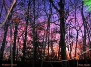 24th Jan 2012 - Backyard Sunset