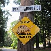 25th May 2010 - May 25.  Do turtles have calendars?