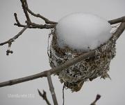 25th Jan 2012 - Snowbird