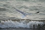 25th Jan 2012 - Flying Away
