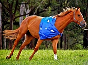26th Jan 2012 - 'orse-stralia Day