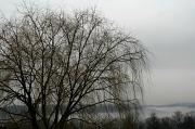 27th Jan 2012 - Layer of fog