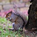 Squirrel in the Park by andycoleborn