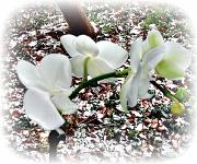 30th Jan 2012 - white & white