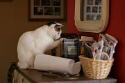 30th Jan 2012 - Literary Kitty