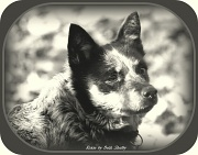 31st Jan 2012 - Roxie