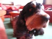 31st Jan 2012 - Yogi dog!