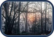 2nd Feb 2012 - Sun on a Foggy Morning